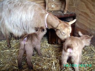 Babies & Angelica 2