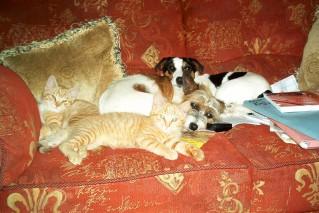 Dogs & Kittens