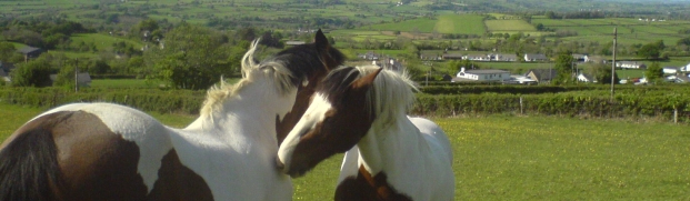horsebanner