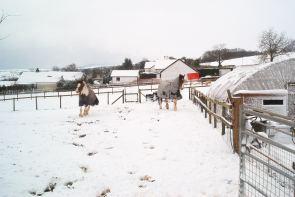 Horsey Snow fun