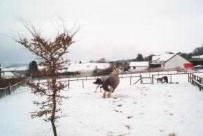More horsey snow fun