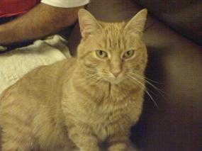 Jerry the Tomcat