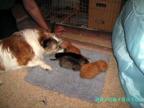 Rosie & Kittens 2010