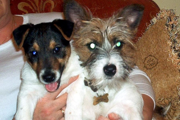 Rosie & Sam as pups