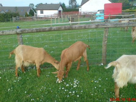 The Pentop Herd