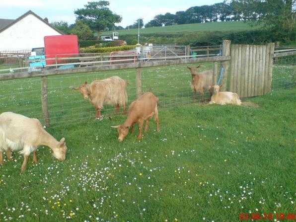 The Pentop herd again