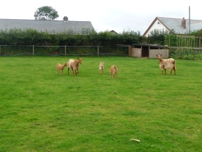 And the herd again