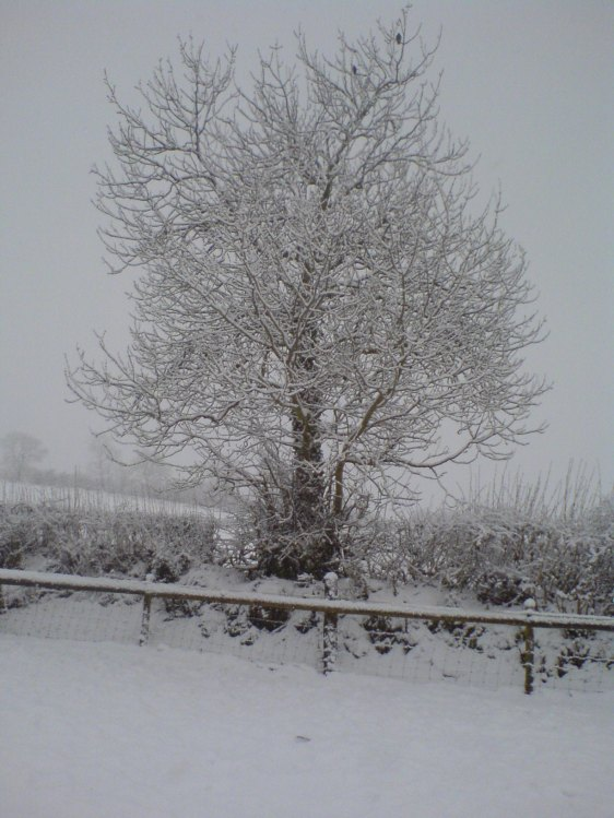 Winter 2011 again